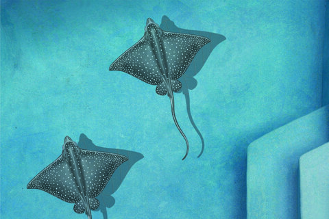 "PORC-ER48-36/SH 37""  x  30"" Spotted Eagle Ray (with shadow)"
